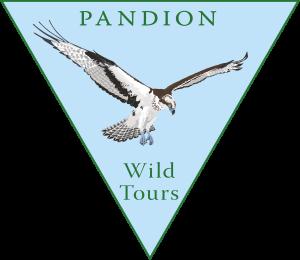 LogoPandionWildTours