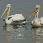 birding_lodge__13_1