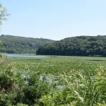 Maluk Preslavets Marsh